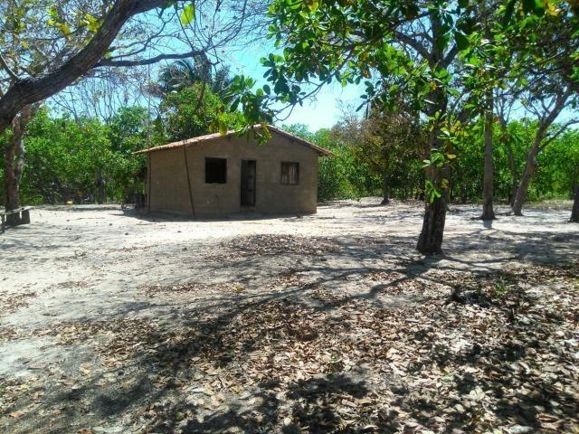 Sitio de 20 hectares, rico em água ótima casa sede e apenas 20 km de Teresina - Foto 17