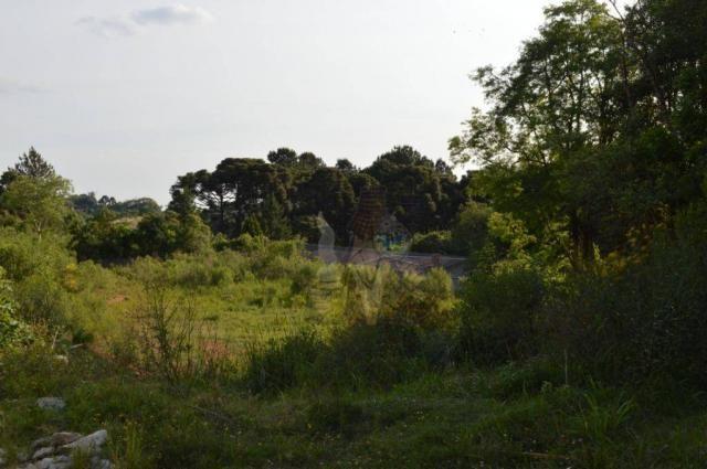 Terreno para alugar, 3100 m² por r$ 3.900/mês - santa felicidade - curitiba/pr - Foto 3