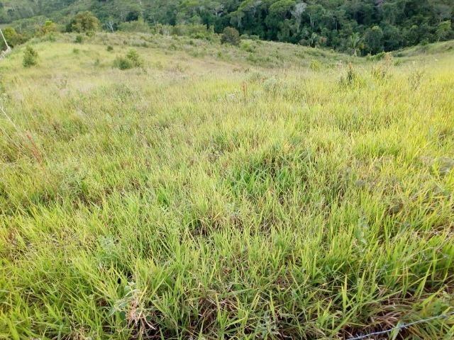 Fazenda em Ubaira-BA - Foto 11