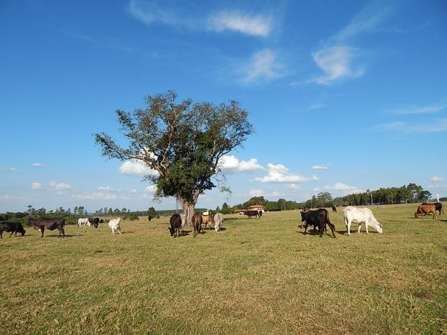 Fazenda de 52 alqueires com represa na divisa (Nogueira Imóveis Rurais) - Foto 17