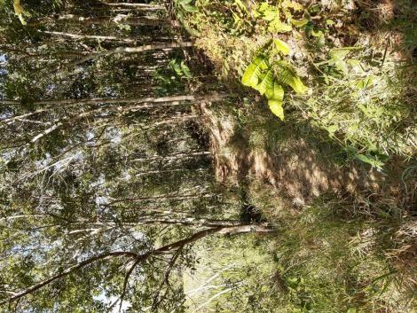 676 - Área de terra no Bugre de 29 hectares - Foto 9