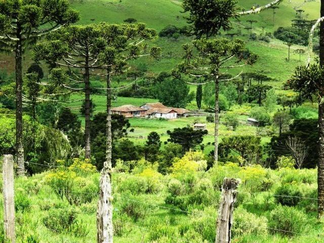 Fazenda em Urubici / chácara área rural - Foto 4