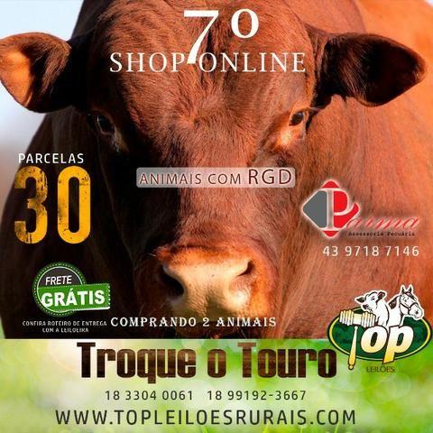 [[10CT]] Shop Senepol PO em 30 pagamentos + Frete Free - Foto 2