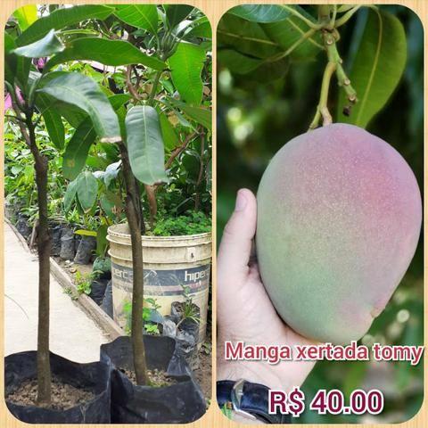 Plantas frut - Foto 4