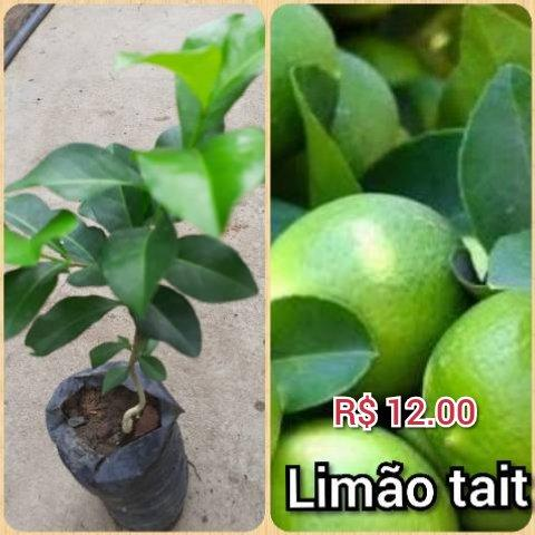 Plantas frut - Foto 3