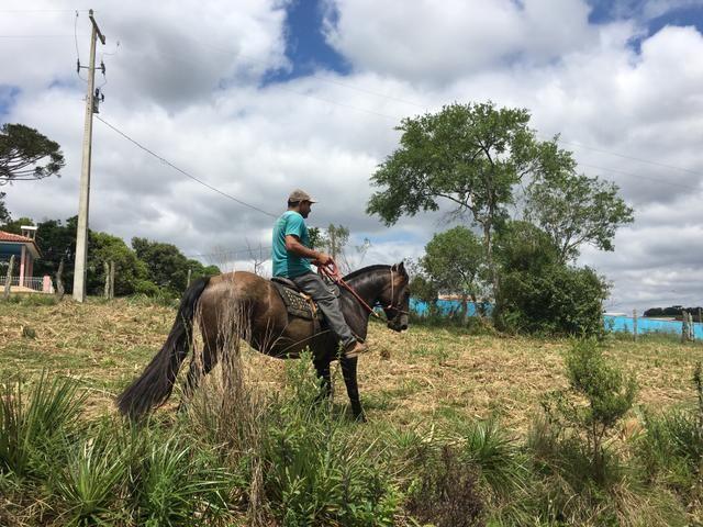 Égua crioula! - Foto 4