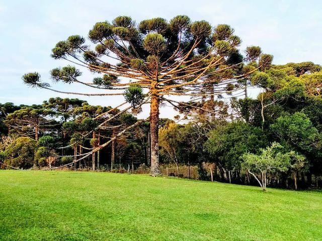 Campos, Fazendas, Matos de Pinus e áreas para compensação em São Francisco de Paula - Foto 2