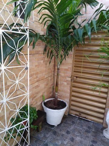 Palmeira grande - Foto 2