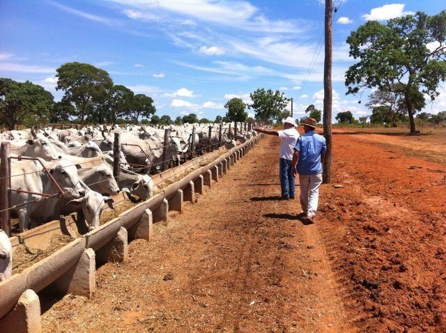 Fazenda 2.686 hectares em ARINOS MG - Foto 4