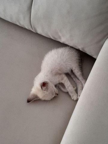 Gatinha filhote para adoção (gato para adoção- fêmea) - Foto 4