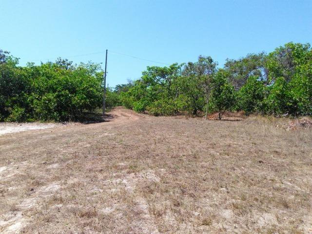 Sitio de 20 hectares, rico em água ótima casa sede e apenas 20 km de Teresina - Foto 5