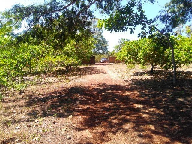 Sitio de 20 hectares, rico em água ótima casa sede e apenas 20 km de Teresina - Foto 9