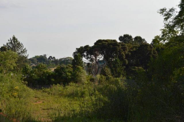 Terreno para alugar, 3100 m² por r$ 3.900/mês - santa felicidade - curitiba/pr - Foto 5