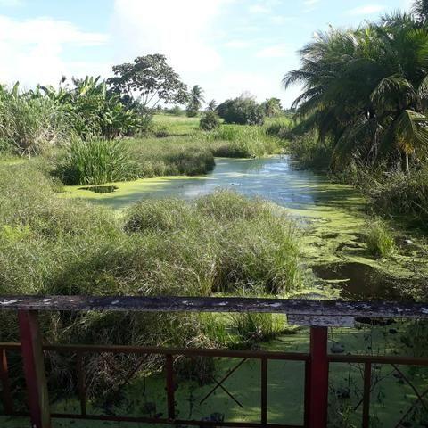Fazenda com 15 hectares entre vera cruz e macaiba - Foto 5