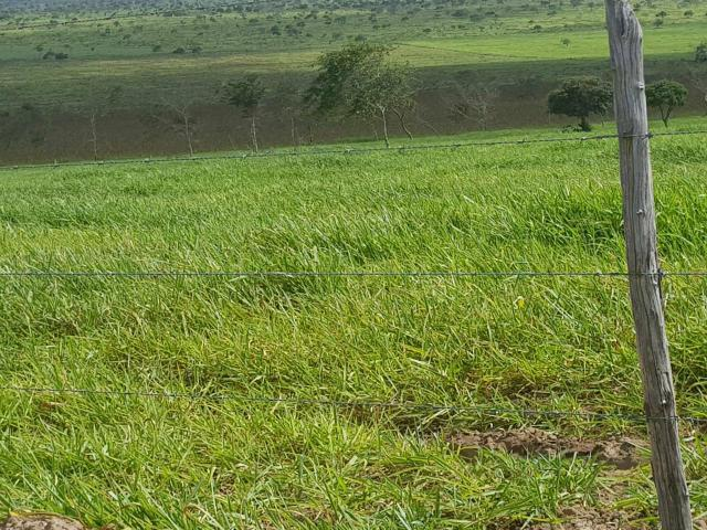 500 Hectares em Canudos Ideal para Criação de Gado com escritura pública - Foto 6