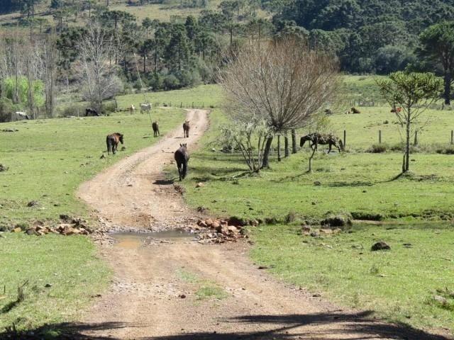 Fazenda em Urubici / chácara área rural - Foto 8
