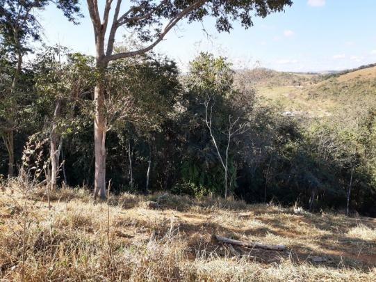 676 - Área de terra no Bugre de 29 hectares - Foto 7