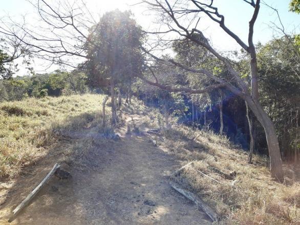 676 - Área de terra no Bugre de 29 hectares - Foto 8