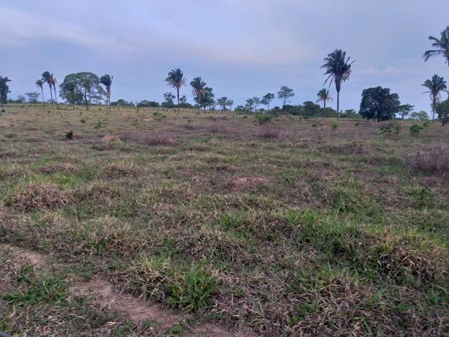 Fazenda com 2 nascentes 8 pasto 5 represas.a 28 km de caldas novas.Go - Foto 6