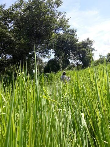 Fazenda 2.686 hectares em ARINOS MG - Foto 2