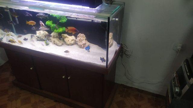Aquário Completo 350L - Foto 3