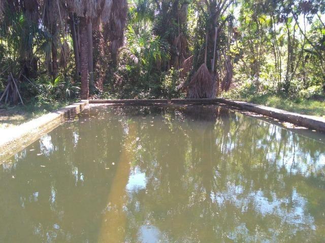 Sitio de 20 hectares, rico em água ótima casa sede e apenas 20 km de Teresina - Foto 15