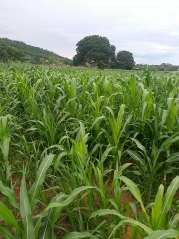 Fazenda 2.686 hectares em ARINOS MG - Foto 15