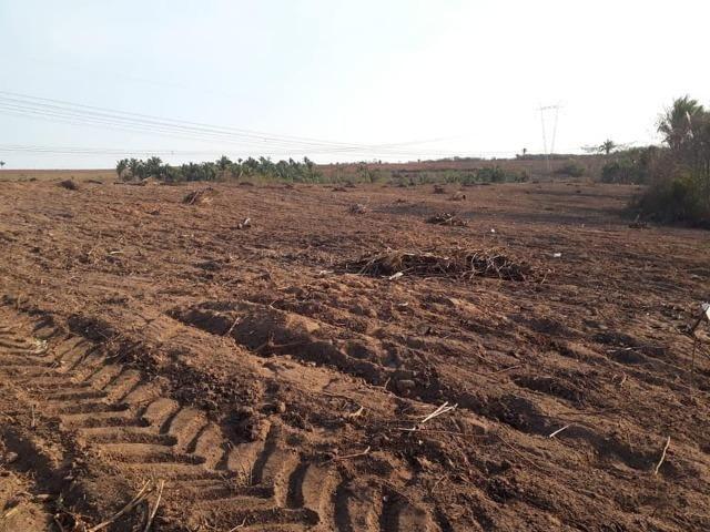 Vendo uma fazenda de 250 hectares em Caxias/MA ideal SOJA - Foto 9