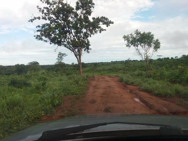 Fazenda em Grajaú, oportunidade - Foto 3
