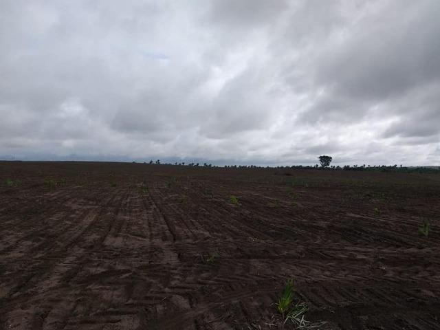 Vendo uma fazenda de 250 hectares em Caxias/MA ideal SOJA - Foto 3