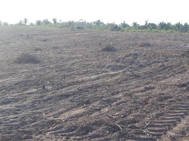 Vendo uma fazenda de 250 hectares em Caxias/MA ideal SOJA - Foto 4