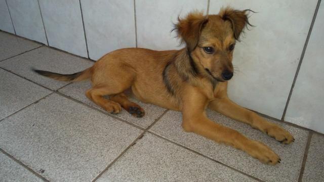 Cadela encontrada (doação)