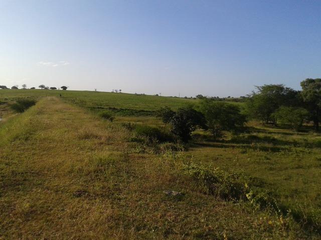 Fazenda com 290 há, casa, curral, 4 barreiros, muito pasto - Foto 2