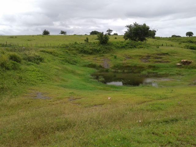 Fazenda com 63 há em brejinho, 10 barreiros, curral - Foto 15