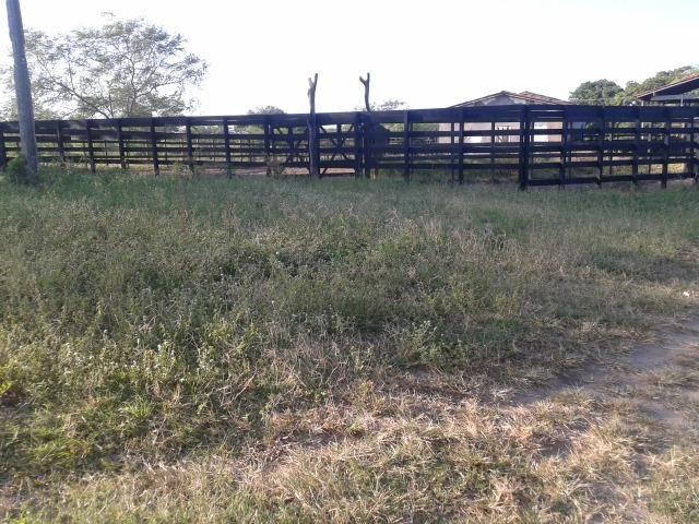 Fazenda com 290 há, casa, curral, 4 barreiros, muito pasto - Foto 19