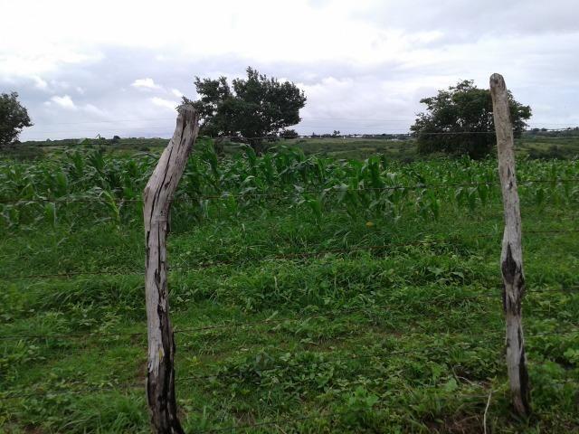 Fazenda com 63 há em brejinho, 10 barreiros, curral