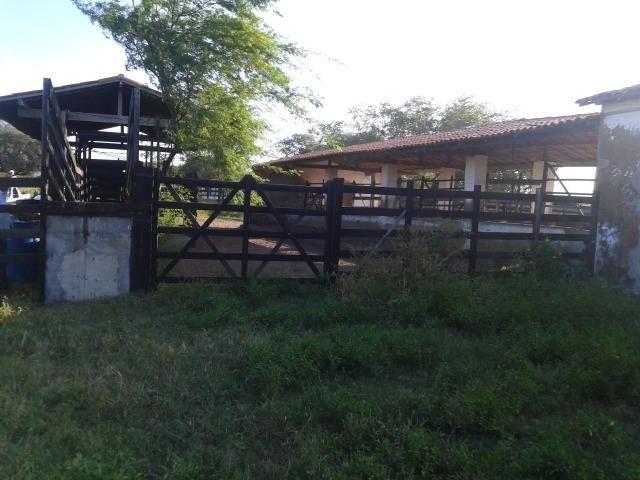 Fazenda com 290 há, casa, curral, 4 barreiros, muito pasto - Foto 20