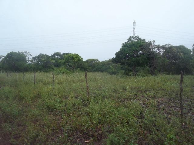 Fazenda com 110 há a 20 km de macaíba, 4 casas, 3 poços, riacho, barreiro - Foto 7