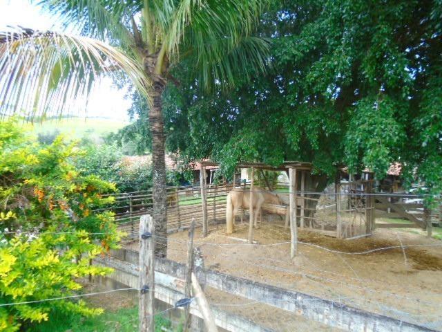 Código 8 - Sítio no bairro do Caju - Maricá com 9800m2 - Foto 9