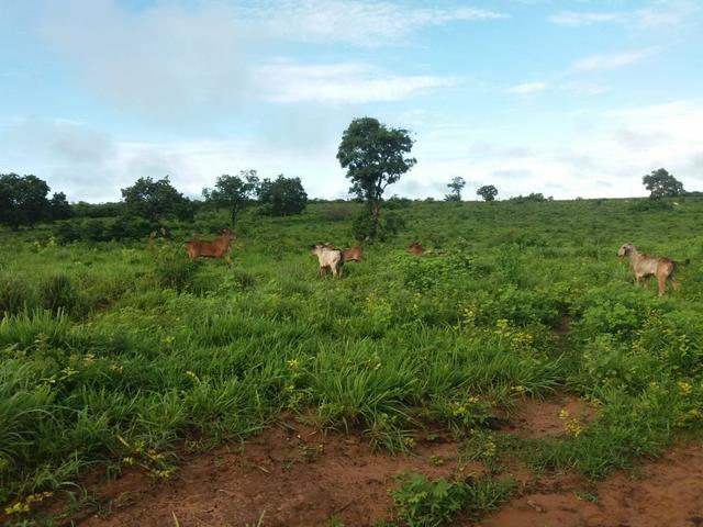 Fazenda em Grajaú, oportunidade - Foto 2