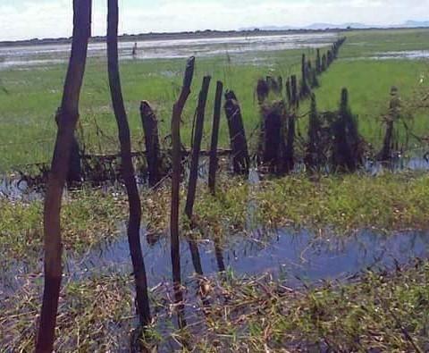 Fazenda à venda, 18400000 m² por R$ 8.000.000,00 - Zona Rural - Pilão Arcado/BA - Foto 6