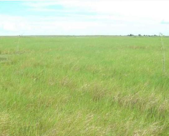 Fazenda à venda, 18400000 m² por R$ 8.000.000,00 - Zona Rural - Pilão Arcado/BA - Foto 4