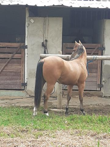 Cavalos - Foto 6