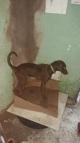 Doação de pet (cachorro) - Foto 2