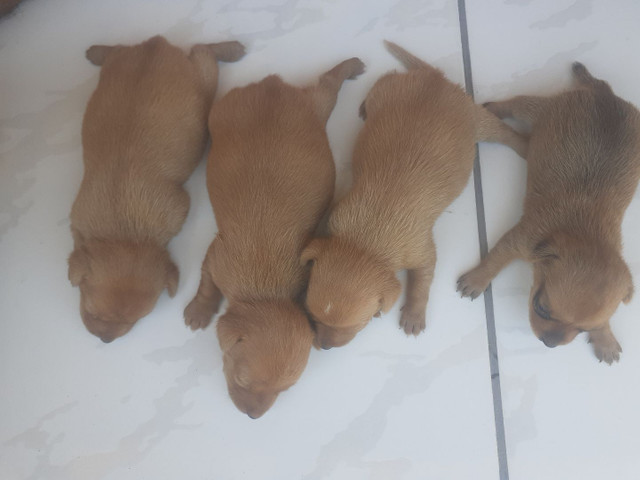 Cachorro - Foto 6