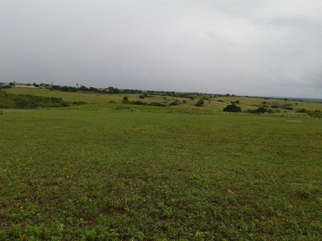 Fazenda com 63 há em brejinho, 10 barreiros, curral - Foto 5