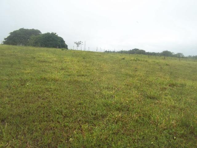 Fazenda com 110 há a 20 km de macaíba, 4 casas, 3 poços, riacho, barreiro - Foto 11