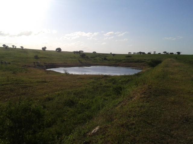 Fazenda com 290 há, casa, curral, 4 barreiros, muito pasto - Foto 17