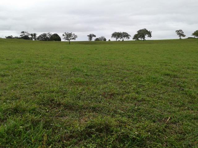 Fazenda com 63 há em brejinho, 10 barreiros, curral - Foto 13