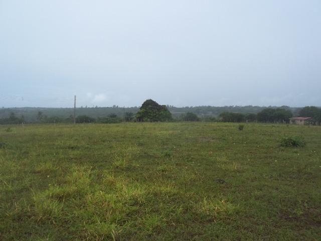 Fazenda com 110 há a 20 km de macaíba, 4 casas, 3 poços, riacho, barreiro - Foto 4